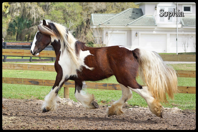 Super_Low_Res_DSC07184_Sophia_floating_trot_mid_air
